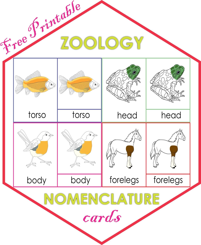 Zoology Nomenclature cards